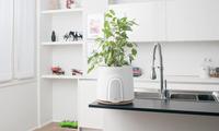 这款空气净化器,还可以拿来养植物|这个设计了不起