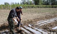 新疆鄯善:积极开展棉花播种期气象服务