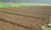 水稻旱育秧苗期,该如何科学管理?
