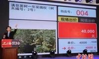 """""""助力云南精准扶贫""""专场拍卖会在沪成功""""落锤"""""""