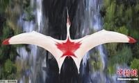 英国一大学发布翼龙新物种形象