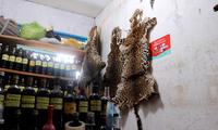 世界动物保护协会发现多种濒危物种在秘鲁被非法交易