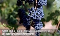 新华全媒+|我国兴起酒庄旅游新时尚